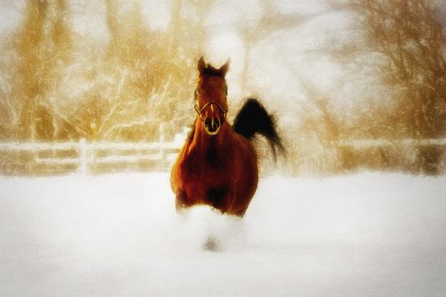 snow_run