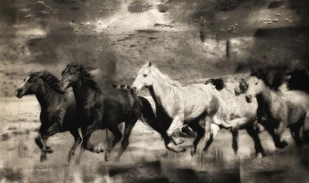 wild_herd